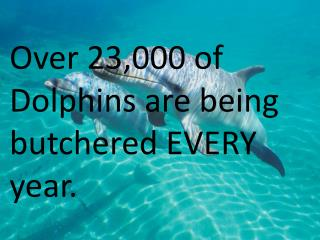 Over 23,000 of Dolphins are being butchered EVERY year.