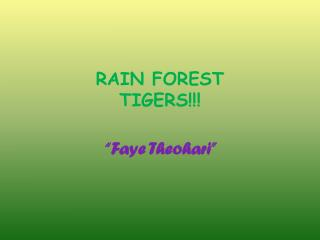 RAIN FOREST  TIGERS!!!