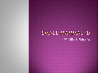Small Mammal ID