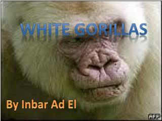 White  gorillas