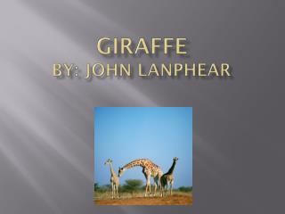 Giraffe by: John  Lanphear