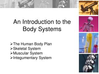 An Introduction to the Body Systems