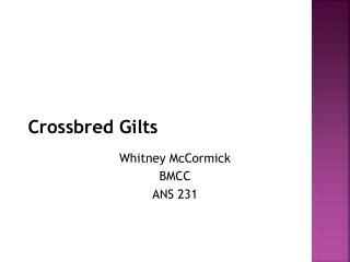 Crossbred Gilts