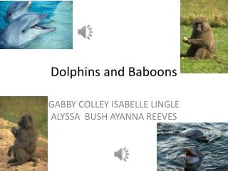 Dolphins and Baboons