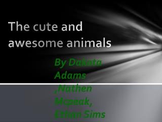 The cute and awesome animals