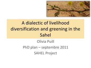 A dialectic of livelihood diversification and greening in the Sahel