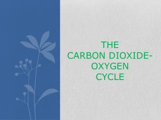 THE  CARBON DIOXIDE-OXYGEN  CYCLE