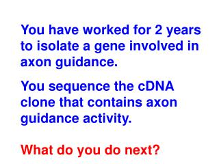 You have worked for 2 years to isolate a gene involved in axon guidance.