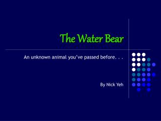 The Water Bear