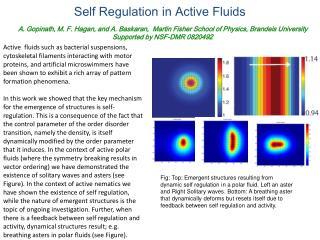 Self Regulation in Active Fluids