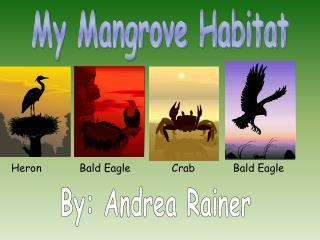 My Mangrove Habitat