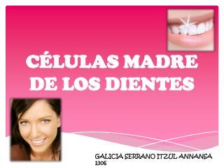 C�LULAS MADRE DE LOS DIENTES
