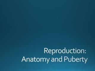 Reproduction:  Anatomy and Puberty