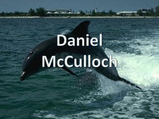 Daniel  McCulloch