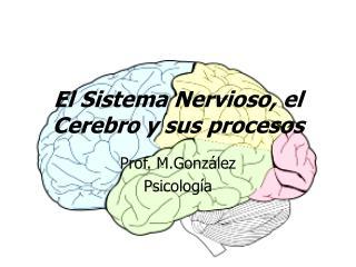 El  Sistema Nervioso , el  Cerebro  y  sus procesos