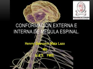 CONFORMACIÓN EXTERNA E INTERNA DE MEDULA ESPINAL.