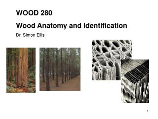 WOOD 280 Wood Anatomy and Identification Dr. Simon Ellis