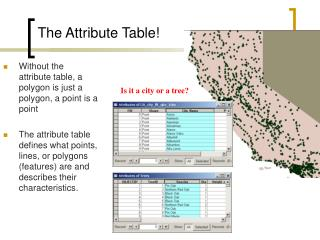 The Attribute Table!