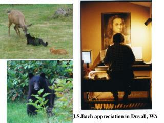 J.S.Bach appreciation in Duvall, WA