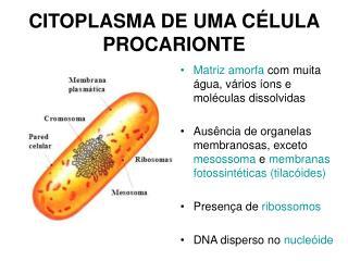 CITOPLASMA DE UMA CÉLULA PROCARIONTE