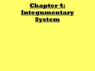 Chapter 4: Integumentary System