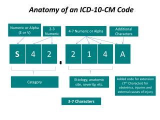 Anatomy of an ICD-10-CM Code