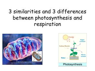 3 similarities and 3 differences between photosynthesis and respiration