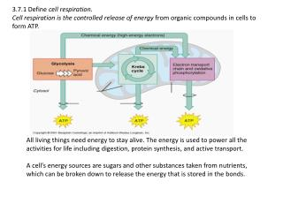 Aerobic cell respiration: glucose + oxygen   carbon dioxide + water + energy