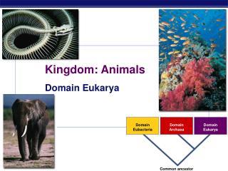 Domain Eubacteria