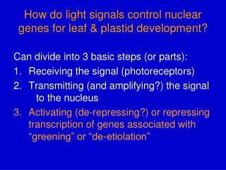 How do light signals control nuclear genes for leaf & plastid development?