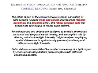 LECTURE 17:  VISION--ORGANIZATION AND FUNCTION OF RETINA