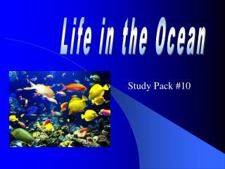 Study Pack #10