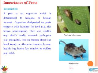 Importance of Pests