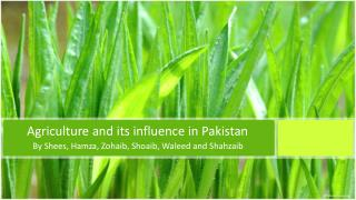 Agriculture and its influence in Pakistan