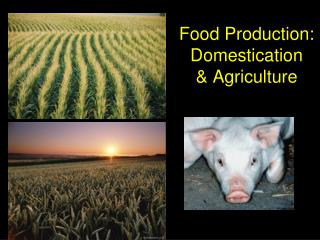Food Production: Domestication   Agriculture