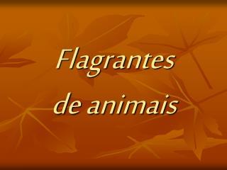 Flagrantes de animais