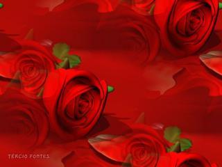 A Flor Que Meu Amigo Me Ofertou.