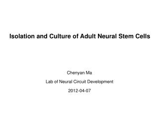 Isolation and Culture of Adult  N eural  S tem  C ells