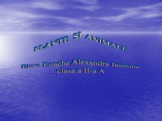 PLANTE  ŞI  ANIMALE Elev: Enache Alexandra Iasmina clasa a II-a A