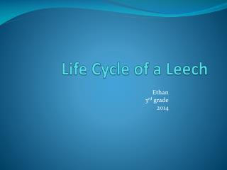 Life Cycle of a Leech