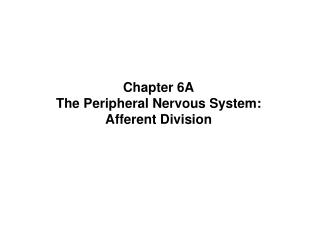 Chapter 6A The Peripheral Nervous System:  Afferent Division