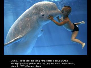 China ... three-year-old Yang Yang kisses a beluga whale