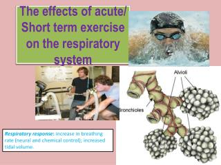 The effects of acute/ Short term exercise on the respiratory system