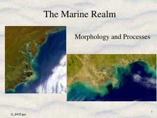 The Marine Realm