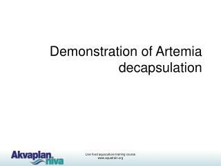 Demonstration of Artemia decapsulation