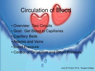 Circulation of Blood