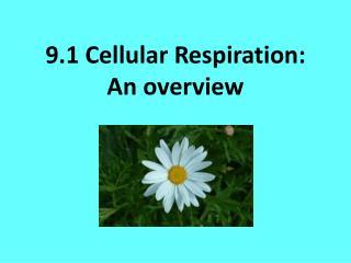 9.1 Cellular Respiration: An overview