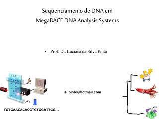 Sequenciamento de DNA em MegaBACE DNA Analysis Systems