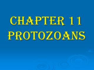 CHAPTER 11 PROTOZOANS