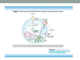 Pokles tyrosinkinasové aktivity inzul i nového receptoru při gestačním  DM.